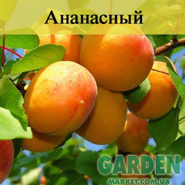 Абрикос Ананасный
