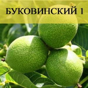 Грецкий орех Буковинский 1