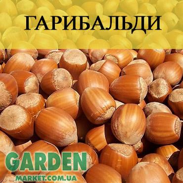 Саженцы фундука Гарибальди