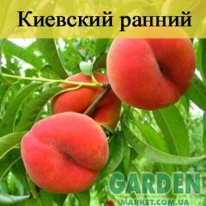Персик Киевский ранний - фото