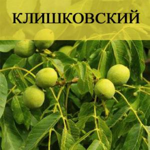 Саженцы грецкого ореха Клишковский