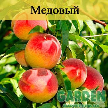 Колоновидный персик Медовый
