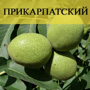 Орех Прикарпатский