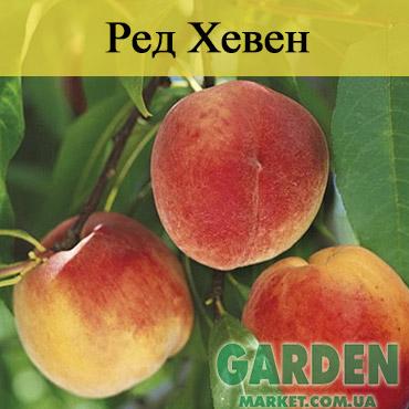 Персик Ред Хевен - фото