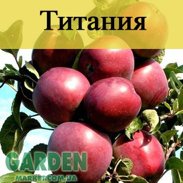 Колоновидной яблоня Титания