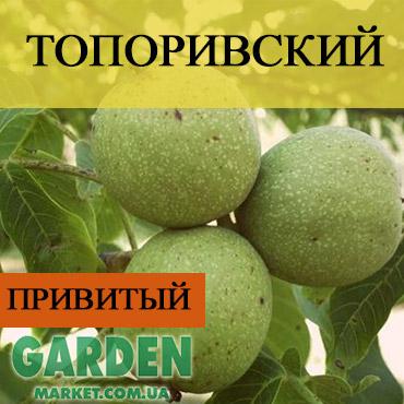 Привитый грецкий орех Топоривский