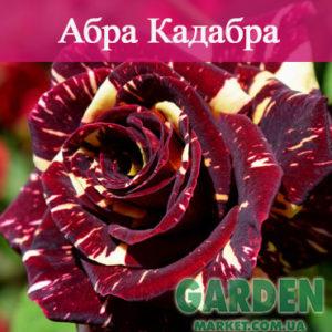 Роза Абра Кадабра