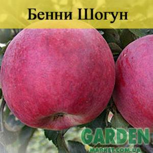 Яблоня Бенни Шогун