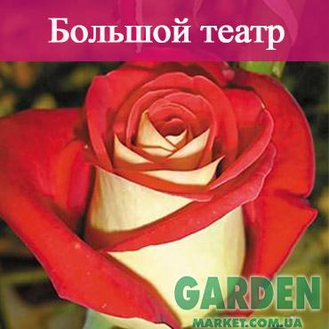 Роза Большой театр