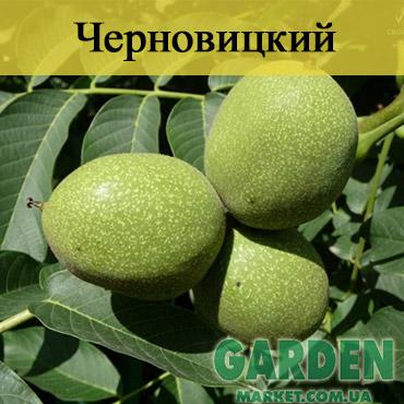 Грецкий орех Черновицкий