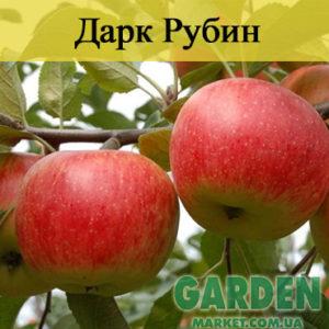 Яблоня Дарк Рубин