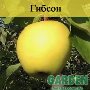 Яблоня Гибсон