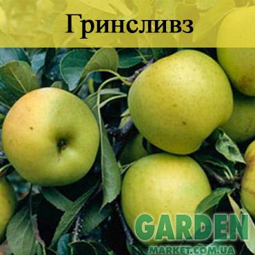 Яблоня Гринсливз