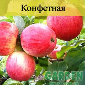 Яблоня Конфетная