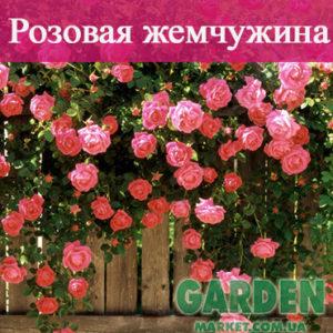 Плетистая роза Розовая жемчужина
