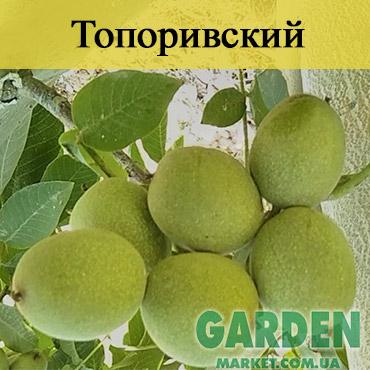 Грецкий орех Топоривский