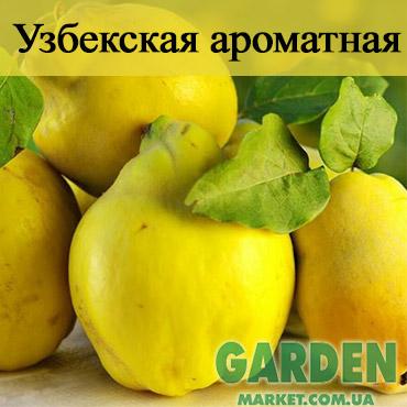 Айва Узбекская ароматная