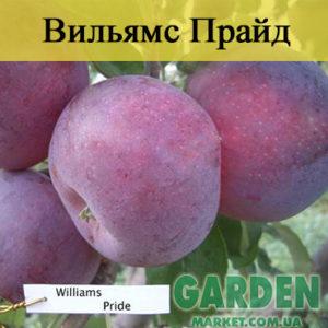 Яблоня Вильямс Прайд
