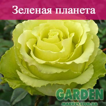 Роза Зеленая планета